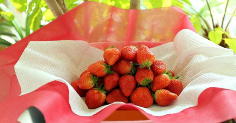 Il segreto del contadino per mantenerle fresche le fragole più a lungo