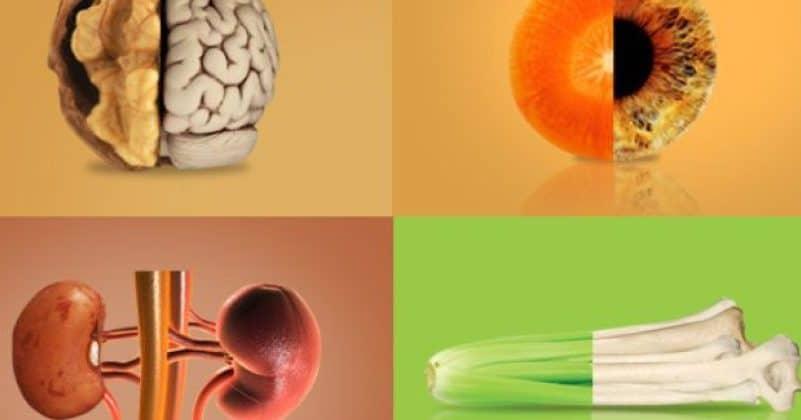 Alimenti e organi: ecco quali somigliano all'organo di cui si prendono cura