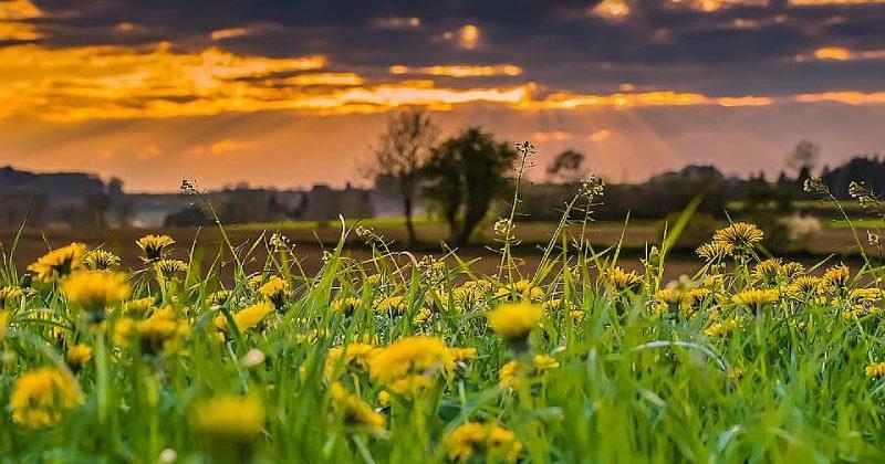 Fiore giallo