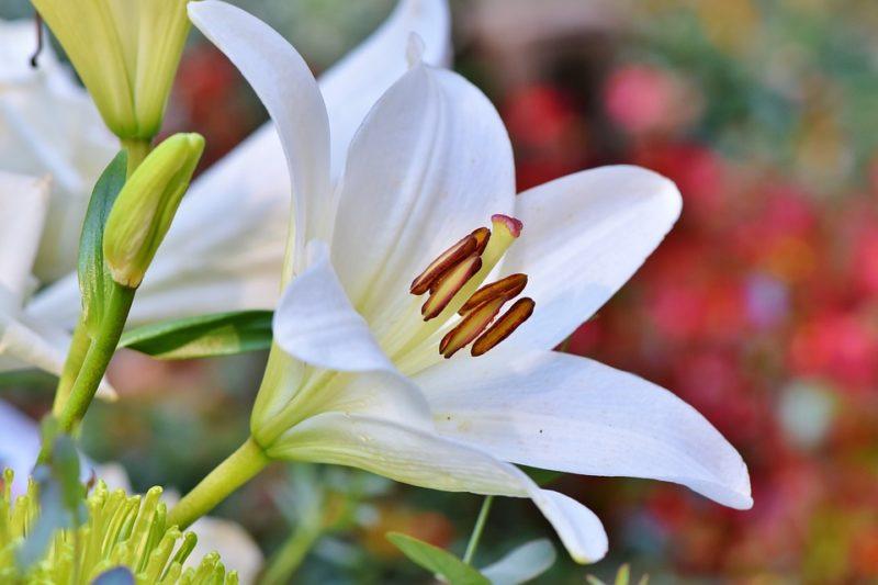 Il fiore del mese di nascita
