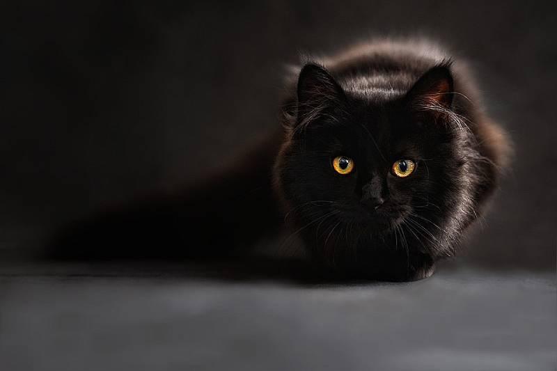 gatti vedono fantasmi