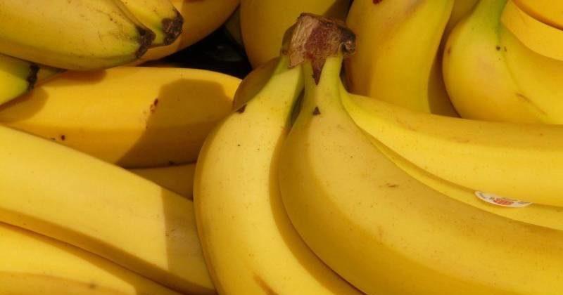 Banana gialla