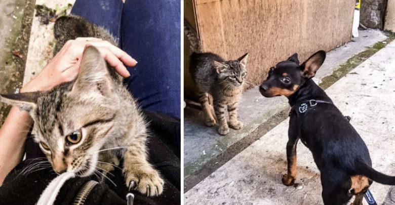 cane e un gatto randagio
