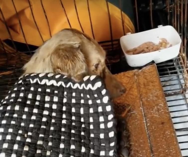 Le cure alla cagnolina ferita