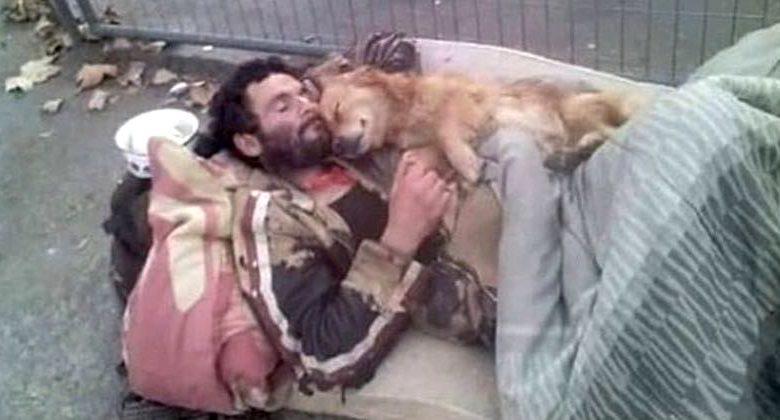 cane del senzatetto