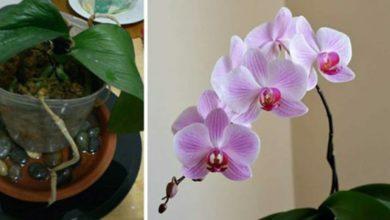 Photo of Trucchi per far fiorire le orchidee ed  ottenere splendidi fiori