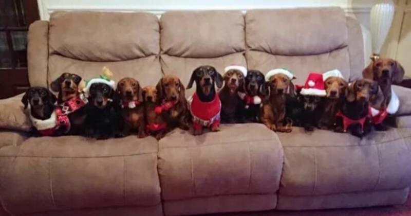 bassotti natalizi