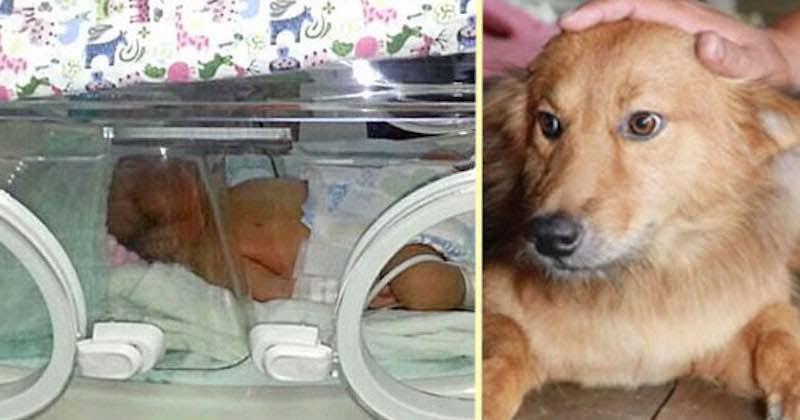 cane ha salvato neonato abbandonato