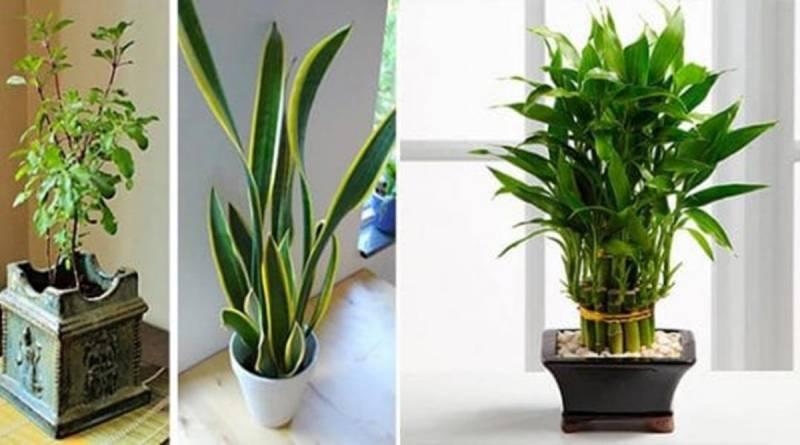 piante-che-attirano-prosperità