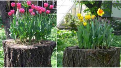 Photo of Come realizzare una bellissima fioriera da un tronco d'albero abbattuto