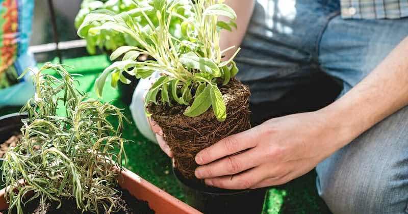 Come fare l'orto sul terrazzo