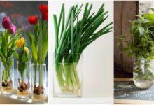 Photo of Fiori e verdure da coltivare in un bicchiere d'acqua