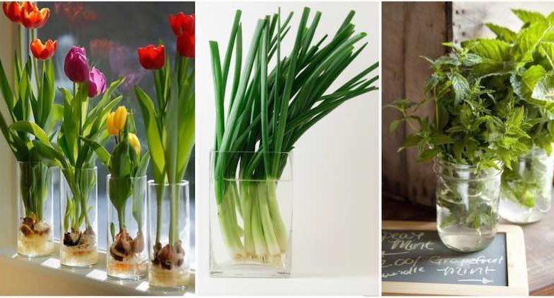 Fiori e verdure da coltivare in un bicchiere d'acqua