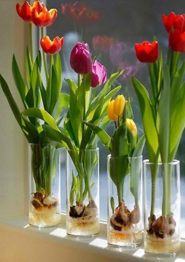 piante e verdure in acqua
