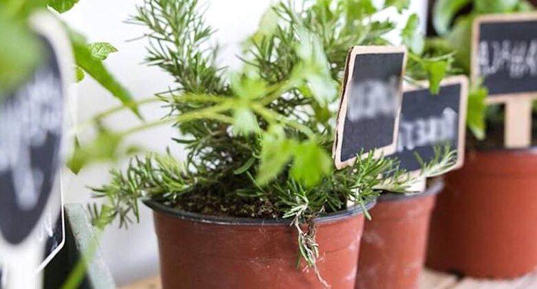 Come piantare a casa le erbe aromatiche