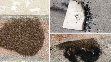Photo of Danno fuoco ad uno sciame di api a Pavia