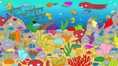 Photo of Tre sfide visive da fare con i vostri amici: trovate il pesciolino e i numeri