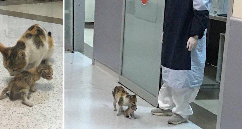 gatto in ospedale