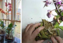 Photo of Consigli utili per prendersi cura in maniera ottimale di un'orchidea