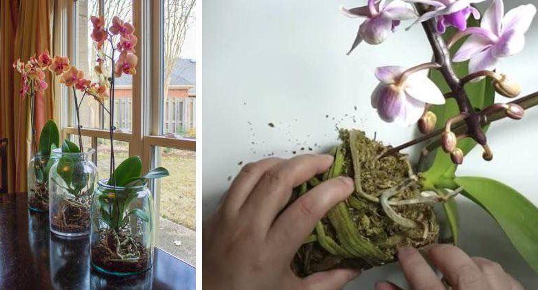 prendersi cura orchidea