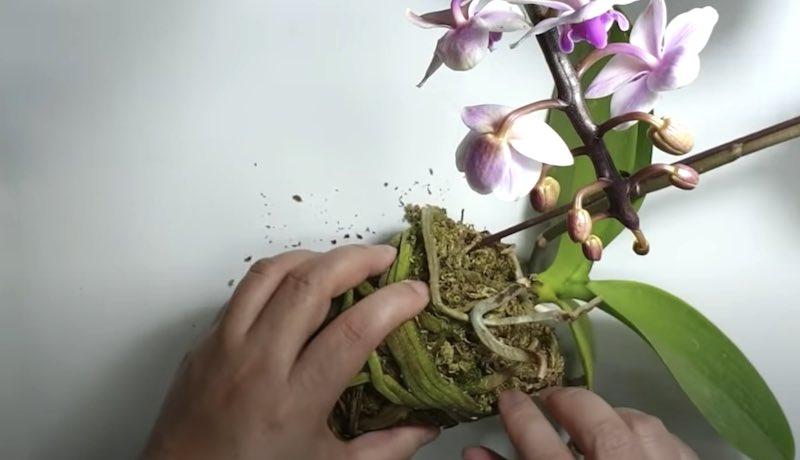 una pianta meravigliosa