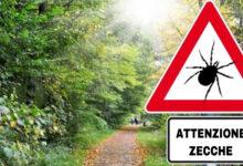 Photo of La zecca dei boschi, un parassita pericoloso per gli uomini. Come difendersi