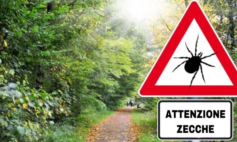 La zecca dei boschi, un pericolo per gli uomini