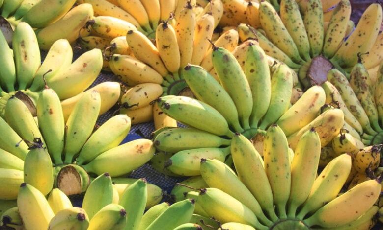 Banana, quando mangiarla e quale scegliere