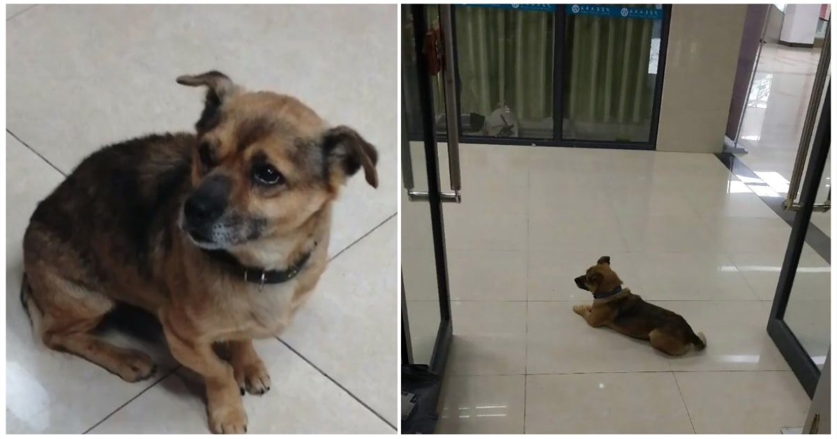 Cane che aspetta il padrone