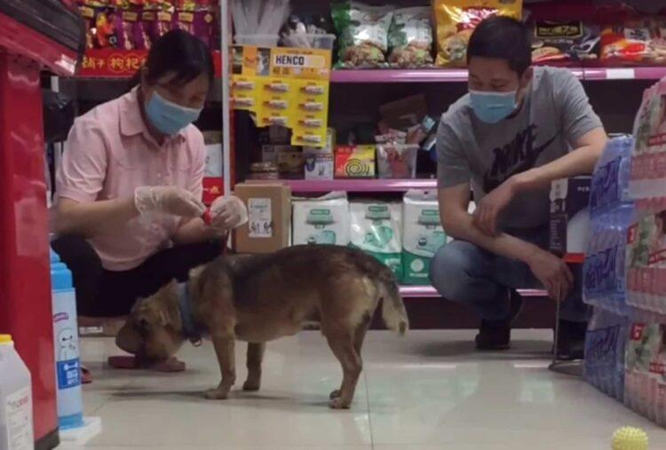 Il cane aspetta il padrone in ospedale