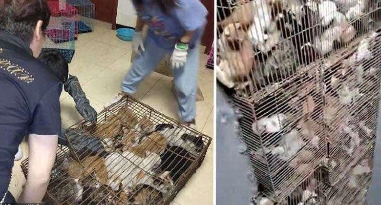 gatti intrappolati in gabbie