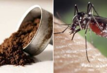 Photo of Come utilizzare i fondi del caffè per tenere lontane le zanzare dalla vostra casa