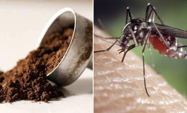 fondi del caffè per allontanare le zanzare