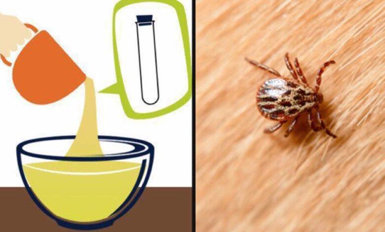 Rimedio naturale per prevenire pulci e zecche