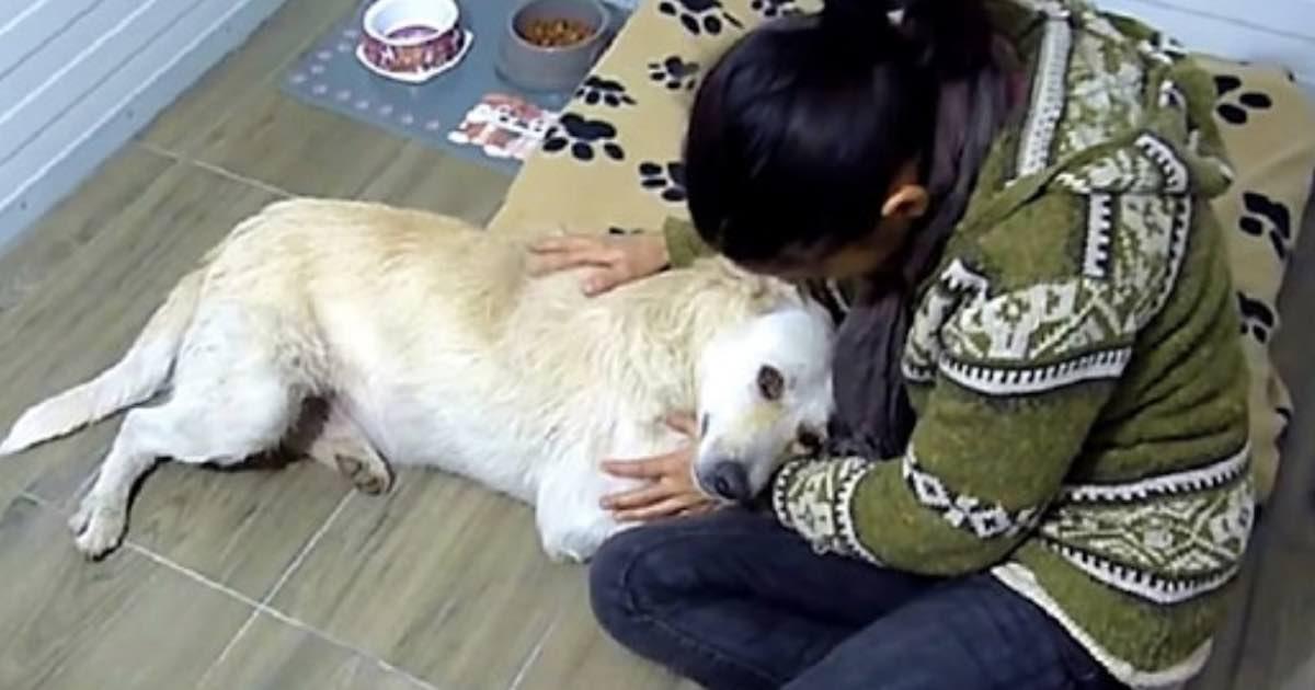 cane con il cancro viene salvato