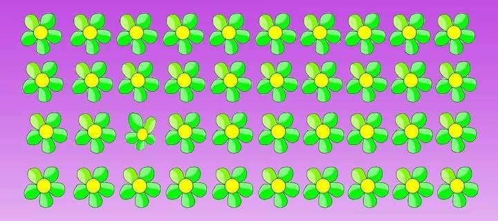 Trova il fiore diverso all'interno nell'immagine proposta qui sotto