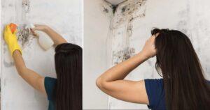 Come eliminare la muffa mura di casa
